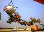 Ngắm những chậu bonsai mini trồng ngược đẹp mê mẩn