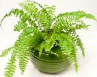 Những loài cây nhỏ vừa làm đẹp nhà, vừa có tác dụng chữa bệnh