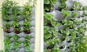 Mẹo trồng rau cực hay dành cho nhà chật