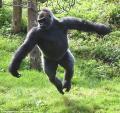 Khỉ đột sổng chuồng phá hỏng đường nước và hệ thống điện