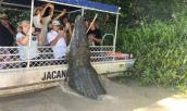 Cá sấu khổng lồ chồm sát thuyền du khách