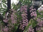Độc đáo vườn lan huyền thoại có một không hai ở Tuyên Quang