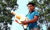 Bỏ làm thuê về quê nuôi vịt, mỗi tháng có hơn 10 triệu đồng