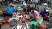 Hành trình đưa cá ươn từ chợ lên bàn ăn của các đầu nậu