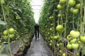 Thạc sĩ 8x trồng rau... bằng điện thoại di động!