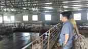 Giá lợn đạt 40.000 đồng/kg: Thủ phủ lợn Hà Nam