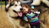 Phong thủy khi nuôi chó cưng để mang lại vận may cho gia đình