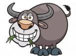 Tử vi tuần mới từ 21 - 27/8: Con giáp nào công việc thuận lợi, tài lộc dồi dào