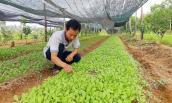 Từ chối học bổng tiến sĩ Úc, bán nhà, lên núi trồng rau hữu cơ
