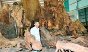 Gốc bàng 600 tuổi như hang động: Trả 35 tỉ, chủ vẫn lắc đầu