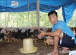 Chàng cựu quân nhân nhờ nuôi gà mà cưới được cô sinh viên