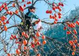 Mùa thu, nhất định tận hưởng cung đường du lịch xứ hồng từ Bắc đến Nam
