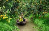 Tái hiện chợ nổi trên sông ở làng trái cây Phong Điền