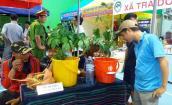 Hình ảnh chợ sâm Ngọc Linh độc nhất ở Quảng Nam