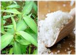 Bật mí 5 cách trị mụn, se khít lỗ chân lông từ lá rau răm đơn giản và hiệu quả