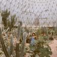 Cuối tuần trải nghiệm ở khu nhà kính trồng xương rồng đẹp nhất Hà Nội