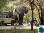 Khách du lịch bị giẫm chết khi chụp ảnh voi
