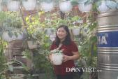 """Khu vườn treo trên tầng 4 """"vạn người mê"""" của cô giáo Hà Nội"""