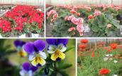 Rực rỡ sắc hoa lạ, giá rẻ bất ngờ ở Đà Lạt