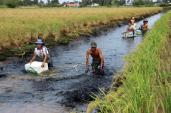 Về thăm thủ phủ nuôi tôm càng xanh ở Cà Mau