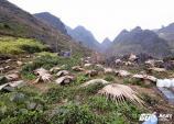 Cảnh thu hoạch mật ong bạc hà ở cao nguyên đá Đồng Văn