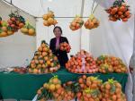Những vườn cam giúp nông dân hái ra tiền tỷ trên đất Mường Sơn La
