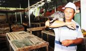 Cho chồn hương ăn chuối và cháo cá, lãi 400 triệu/năm