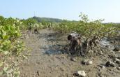 Nghề bắt ngán- đặc sản ăn hoài không chán trên đảo Quan Lạn