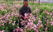 Ngất ngây với vườn hoa chuông rực rỡ ở Đà Lạt