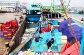Đầu năm, ngư dân Bình Định trúng đậm cá ngừ thu về tiền tỷ