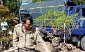 Siêu lạ loạt bonsai từ cây lương thực cực dị