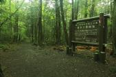 Rợn tóc gáy thăm khu rừng tự sát ở Nhật Bản