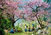 Tour du lịch ngắm hoa giá rẻ hút khách dịp sát Tết