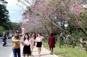 Thêm sáu cung đường mang tên các loài hoa tại Đà Lạt
