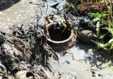 Tuyệt chiêu làm hầm bắt cá đồng ngày giáp Tết
