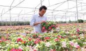 Vườn hoa treo rực rỡ, giá tiền tỷ giữa đồi cà phê