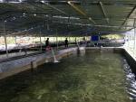 Trại cá nước lạnh