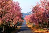 Du lịch sau Tết: Top 4 điểm đến cực hot nhất định không được bỏ qua