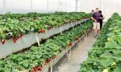 Trải nghiệm vườn dâu tây tuyệt đẹp ở Đà Lạt