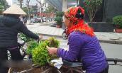 Rau rừng Sau Sau - Đặc sản Lạng Sơn phải nếm thử một lần