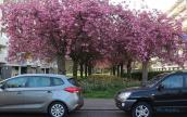 Sắc xuân ngập tràn vương quốc hoa Hà Lan