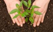 Mẹo trồng cây siêu hiệu quả với trứng và chuối chín
