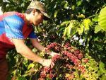 Vụ ly hôn của ông Đặng Lê Nguyên Vũ: Lại lo giá cà phê giảm