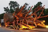 Một xe chở cây