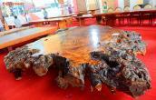 Siêu phản gốc cây hơn tỷ đồng khiến đại gia Việt phát sốt