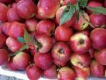 7 loại quả Trung Quốc bán tràn chợ Việt: Đẹp long lanh, rẻ như rau