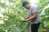 Vườn dưa kim hoàng hậu xanh mướt của lão nông Hà Tĩnh