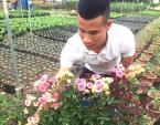 Anh bảo vệ ham trồng hoa hồng, thu 450 triệu đồng/tháng