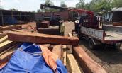 Bắt khẩn cấp giám đốc công ty kinh doanh gỗ