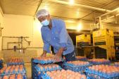 Sắp trung thu, giá trứng gà tăng